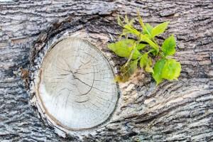 árvore seca folha