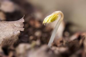 seedling-1284663_1920