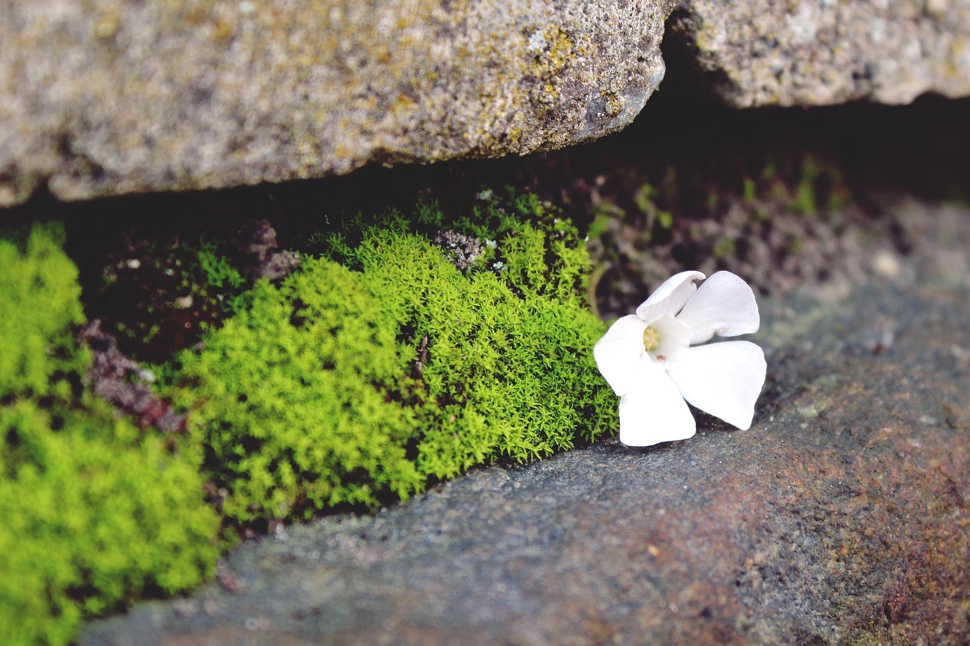 Floresça onde você está plantado