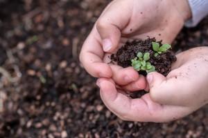 seedlings-3448883_1920