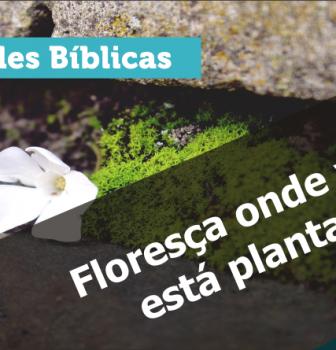 0635 – Floresça onde você está plantado